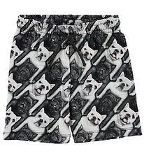 Molo Shorts - Alim - English Bulldog