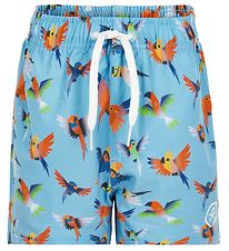 Color Kids Badeshorts - UV30+ - Blue Fish