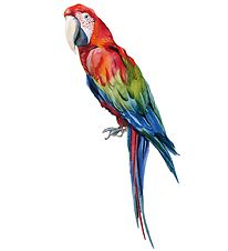 Thats Mine Wallstickers - Manuel The Parrot