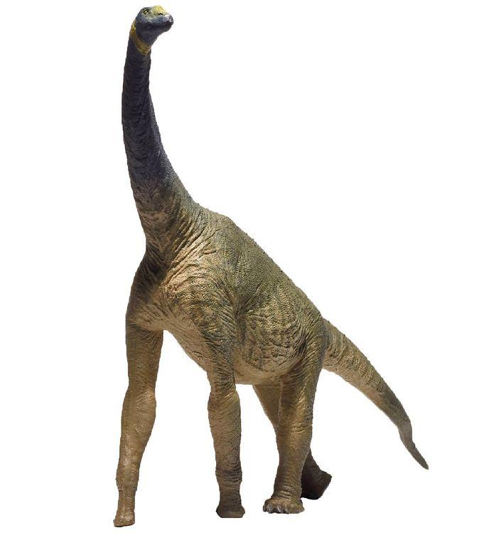 Image of EoFauna - 22,5 x 30 cm - Atlasaurus Imelakei (XH306)