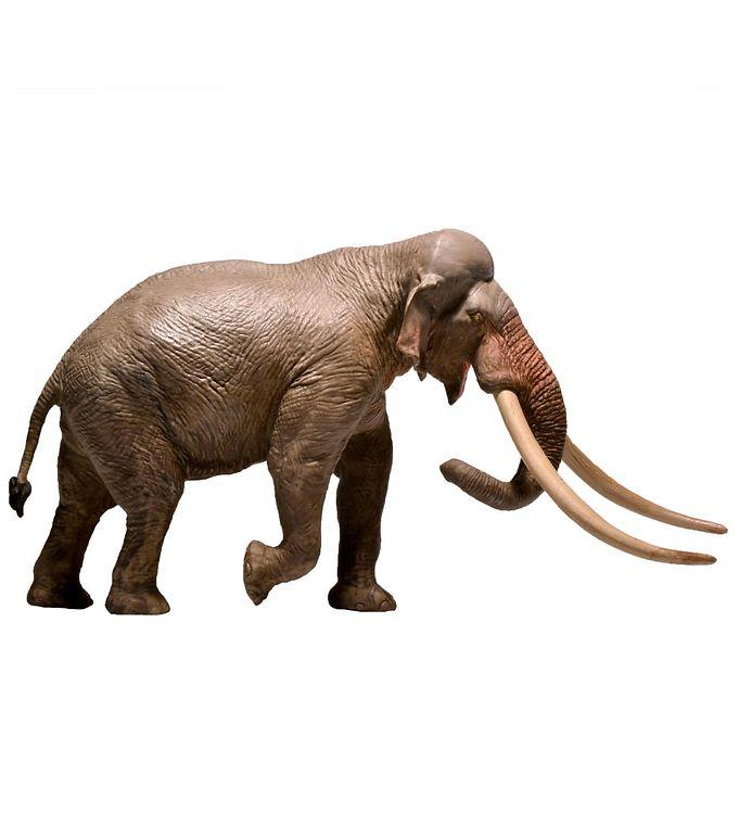 Image of EoFauna - 12,5 x 24 cm - Straight-tusked Elephant (XH309)